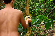 A tourist hands a piece of fruit to a white-faced capuchin monkey (Cebus capucinus) in Manuel Antonio National Park, Costa Rica.