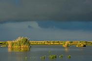 Storm clouds over the reed beds, Phragmites communis, Danube delta rewilding area, Romania