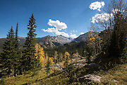 Turning autumn leaves in Rocky Mountain National Park, Colorado