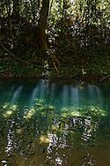 Cooper Creek, Daintree rainforest North Queensland, Australia