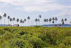 Palm Trees Next To Ream Naval Base