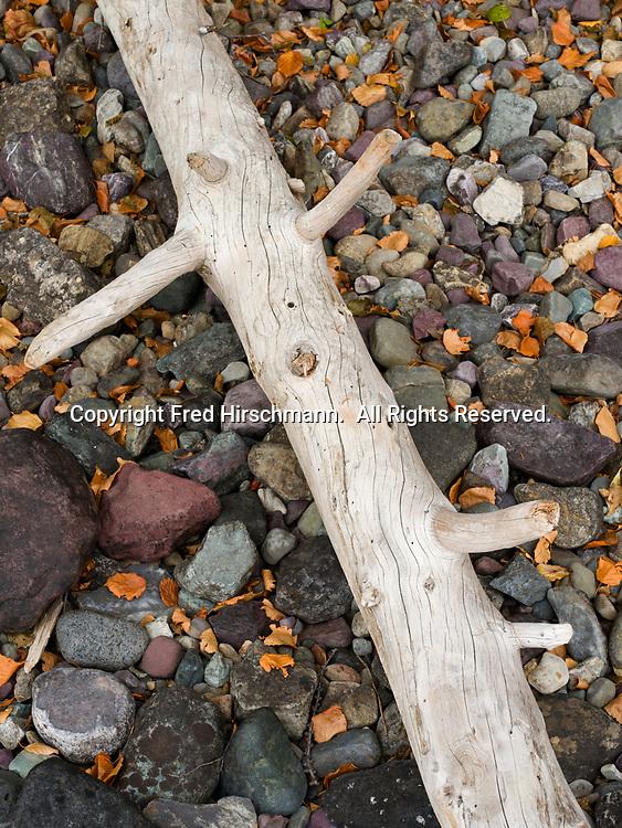 Driftwood on the shore of Kintla Lake, Glacier National Park, Montana