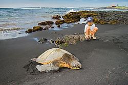 An oriental child observing Green Sea Turtle, Chelonia mydas, Punaluu or Punalu`u Black Sand Beach, Big Island, Hawaii, Pacific Ocean