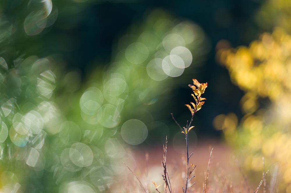 Meadow abstract, morning backlighting, October, Sleeping Bear Dunes National Lakeshore, Michigan, USA