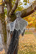 Halloween decorations hanging in tree in Missoula, Montana, USA