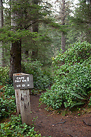 Cape Falcon trail. Oswald West State Park, OR