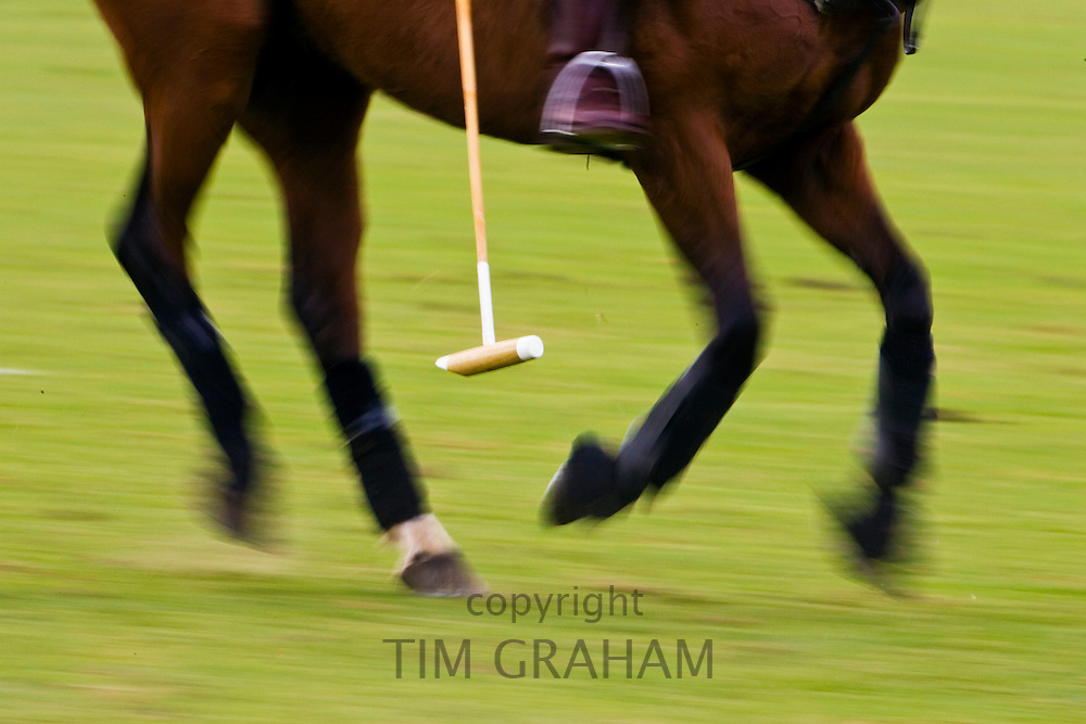 Polo pony at Guards Polo Club in Windsor, United Kingdom
