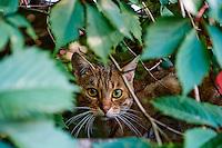 France, Indre (36), Argenton-sur-Creuse, chat dans une rue // France, Indre (36), Argenton-sur-Creuse, cat in the street
