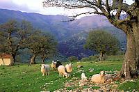 Italie, Sardaigne, Province de Nuoro, Monti del Gennargentu, Barbagia