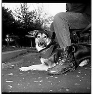 HOMELESS AND THEIR DOGS