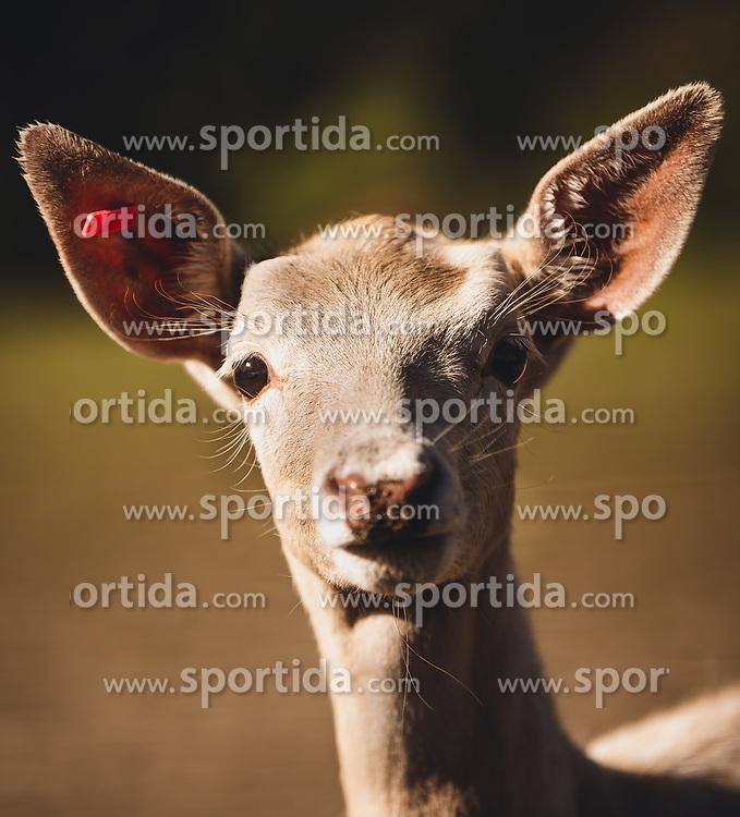 THEMENBILD - ein Jungtier, aufgenommen am 30. September 2018, Haibach ob der Donau, Österreich // a young animal pictured on 2018/09/30, Haibach ob der Donau, Austria. EXPA Pictures © 2018, PhotoCredit: EXPA/ Stefanie Oberhauser