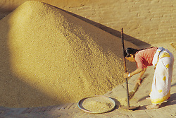 Asia, Nepal, Kathmandu Valley, Bhaktapur, woman sifting adn piling rice in pyramid in city square