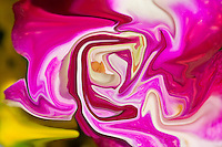 pink and red abstractions in fluid shape with many shades, colors of the nature in spring