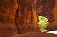 Buckskin Gulch, Arizona, hiking