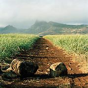Countryside scene, Mauritius