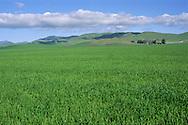 Fertile grasslands, near Tassajara, Contra Costa County, CALIFORNIA