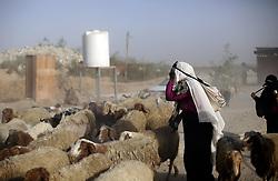 April 17, 2018 - Gaza City, The Gaza Strip, Palestine - A Palestinian woman herds sheep near the Gaza-Israel border on the outskirts of Gaza City, on April 17, 2018. (Credit Image: © Mahmoud Issa/Quds Net News via ZUMA Wire)
