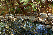 Ein Gedi sweet water springs, in the Judean desert, Israel, Wadi David nature reserve