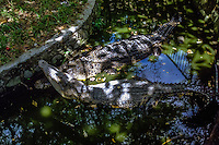 Indonesia, Sumatra. Medan. The old Medan Zoo, now moved to e new location. Crocodiles.