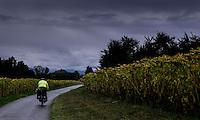 Biking in Switzerland during fall - withered sunflower feld