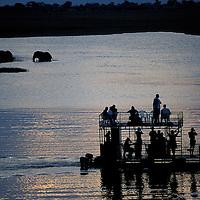 Botswana, Chobe National Park, Tourist boat approaches Elephants (Loxodonta africana) in Chobe River at sunset