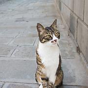 Cats in Venice