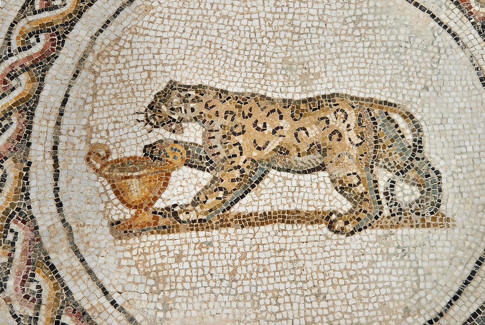 Picture of a Dionysiac Roman mosaics design depicting  panther in front of a wine crater, from the ancient Roman city of Thysdrus. 3rd century AD. El Djem Archaeological Museum, El Djem, Tunisia. .<br /> <br /> If you prefer to buy from our ALAMY PHOTO LIBRARY Collection visit : https://www.alamy.com/portfolio/paul-williams-funkystock/roman-mosaic.html . Type - El Djem - into the LOWER SEARCH WITHIN GALLERY box. Refine search by adding background colour, place, museum etc<br /> <br /> Visit our ROMAN MOSAIC PHOTO COLLECTIONS for more photos to download as wall art prints https://funkystock.photoshelter.com/gallery-collection/Roman-Mosaics-Art-Pictures-Images/C0000LcfNel7FpLI