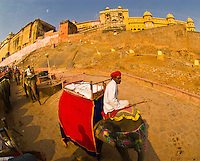 Mahouts on elephants riding down the hill from the Amber Fort, Amber (near Jaipur), Rajasthan, India