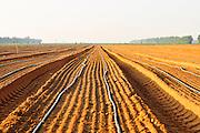 Israel, Negev Desert, Vegetable Field