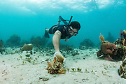 Conch fisher<br /> Nelson Norellana<br /> Caye Caulker<br /> Ambergris Caye<br /> Belize<br /> Central America