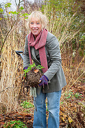 Carol Klein with poppy which has been dug up to take root cuttings from