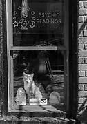 Psychic Readings, Washington, DC