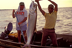 Stock photo of a man holding up a freshly caught tarpon (Megalops atlanticus) in his boat in Parismina, Costa Rica