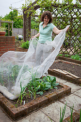 Protecting a vegetable bed with garlic and cabbages with netting