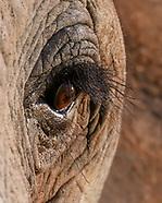 ELEPHANT ANATOMY, ECOLOGY