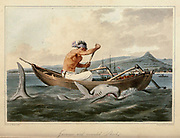 The Javanese and wounded Shark From the book A voyage to Cochinchina, in the years 1792 and 1793. To which is annexed an account of a journey made in the years 1801 and 1802, to the residence of the chief of the Booshuana nation by Sir John Barrow, 1764-1848 Published in London in 1806 by T. Cadell and W. Davies