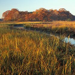 "A tidal creek in a New Hampshire salt marsh. Tidal marsh. Oak trees.  ""Massacre Marsh.""  Fall. Rye, NH"