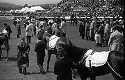 """26/06/1965<br /> 06/26/1965<br /> 26 June 1965<br /> Irish Sweeps Derby at the Curragh Race Course, Co. Kildare. Image shows The horses prior to the race. the two horses closest the camera are """"Meadow Court"""" and """"Convamore"""". Horse on the far side is """"Sierra de Mizas""""."""