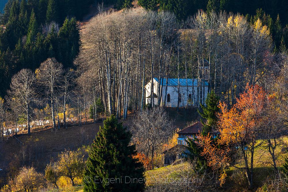 Church hidden in poplar forest