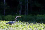 Tully Lake, Massachusetts