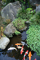 Japanese koi ponds or carp ponds are a standard feature in many Japanese gardens. In Japan, carp represent strength and are used as a symbol of boyhood.
