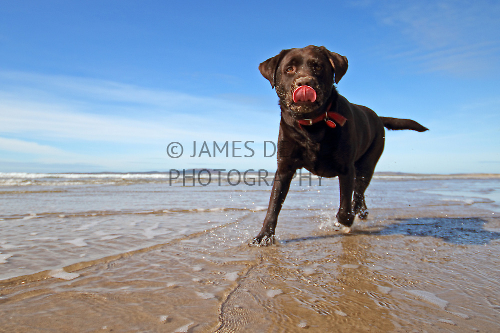 Privately Commissioned Portrait of a family pet at Laggan Bay