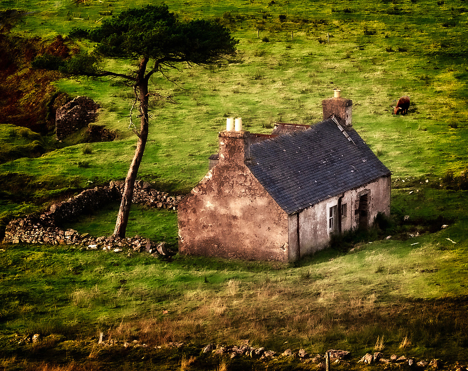 This is a 'croft' or small land holding farm. The broken down walled area  is a 'fold' built to offer some shelter to livestock. The highland cattle, one appears in the top right, would be a fold of cattle - not a herd. A excellent example of a scotch pine rises out of the fold.