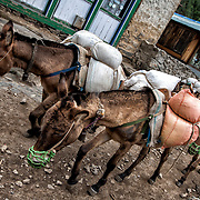 NEPAL. Everest Region, Phakding. May 20th, 2012. Local mountain donkeys.