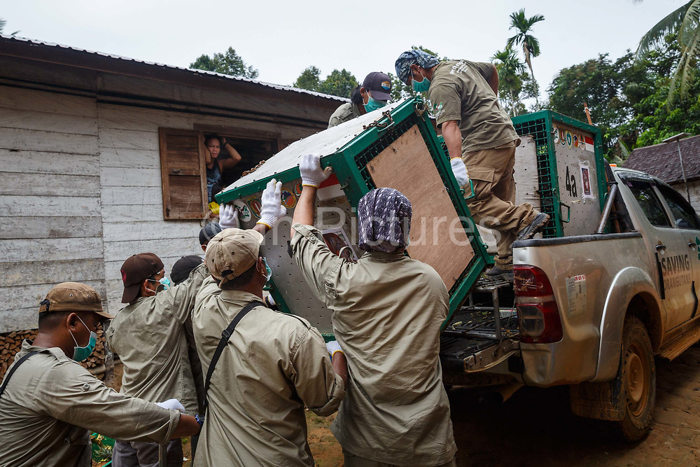Techicians lift a cage containing Kato, a large male orang-utan, from a pick-up truck in Tumbang Tundu village in Central Kalimantan, Borneo, Indonesia on 23rd May 2017. Kato, and 5 female orang-utans, are being taken on a 16 hour journey by road and river from Nyaru Menteng Rehabilitation Centre, run by the Borneo Orangutan Survival Foundation, to a release site in Bukit Baka Bukit Raya National Park.
