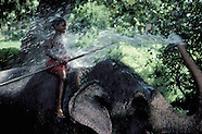 SRI LANKA ELEPHANT KEEPER