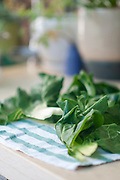 Edible leafs of Chard or Swiss chard (Beta vulgaris) are being air dried on a cloth outdoors after picking and washing to prepare for storage