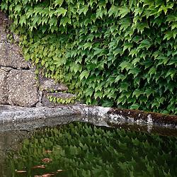 Santa Maria Do Bourho, Portugal - A pool on the grounds of the Cistercian monastery of Santa Maria Do Bourho reflects ivy in it's murky water..Photo by Susana Raab