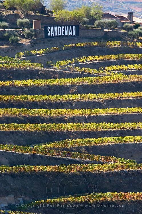 vineyards quinta do seixo sandeman douro portugal