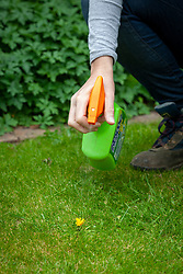 Spraying dandelion weeds in a lawn with selective weed killer